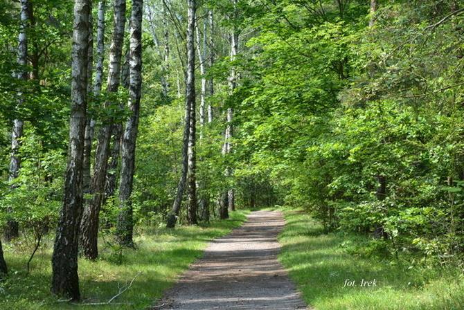 Soczysta zieleń w lesie