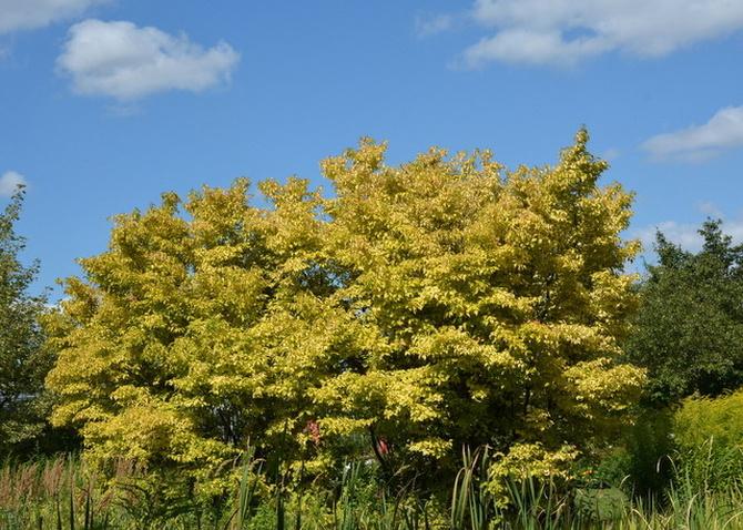 Zdjęcie drzewa z wtorku