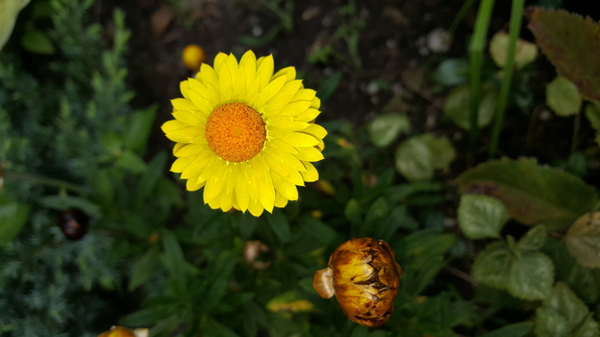 żółty......