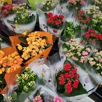 dużo kwiatów