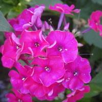 ..i jeszcze różowy.....