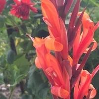 I tak pięknie zakwitł kwiatek