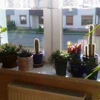 Kaktusów Ciąg Dals