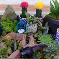 Kaktusy i rojniki 2