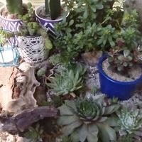 Kaktusy i rojniki
