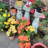 Kwiatki koło mojej letniej altanki