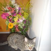 Kwiaty i Filuś
