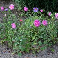 Kwiaty w skansenie