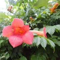 Milin...szansa na dalsze kwitnienie
