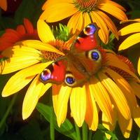 Słoneczne kwiaty