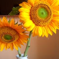 Słonecznego sierpnia życzę:-)