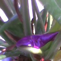 Wyłania się kolejny kwiat