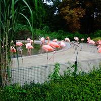 Zoo Ostrawa