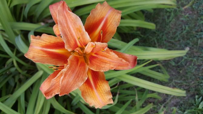 Lipcowy kwiat....