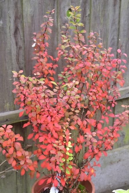 W jesiennych barwach