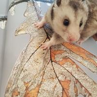 Franek odkrywa jesień