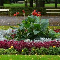 Inny fragment kwietnika w parku