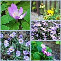 Jesienne kwiatki