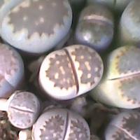 Kamień na kamieniu ;)