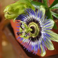 kolejny kwiat przyciąga swym urokiem