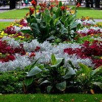 Kolorowy kwietnik w Ogrodzie Saskim