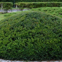 Ktoś w parku zostawił zielony beret