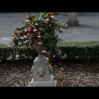 Kwiaty w Ogrodzie Saskim, filmik