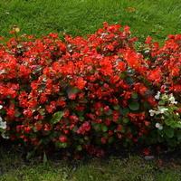 Kwiaty z bliska przy Fontannie Wielkiej