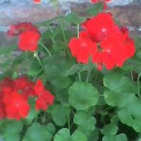 Kwitnie w najlepsze