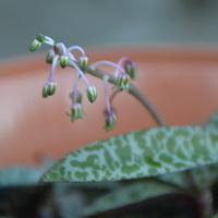 Maleńkie kwiatuszki