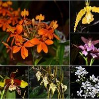 orchidee ...