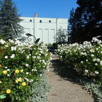 Róże-Ogród Botaniczny we Wrocławiu