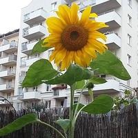 Słoneczne Blokowisk