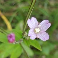 Taki malutki kwiatek rósł
