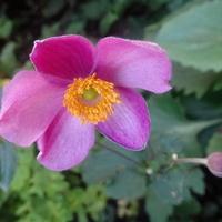 Znalazłam też intensywny róż :)