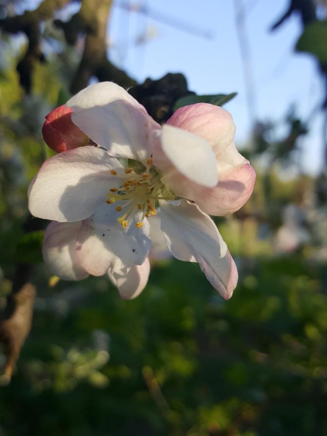 Czekam na wiosne