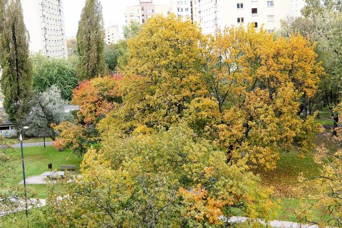 Jesień idzie przez park