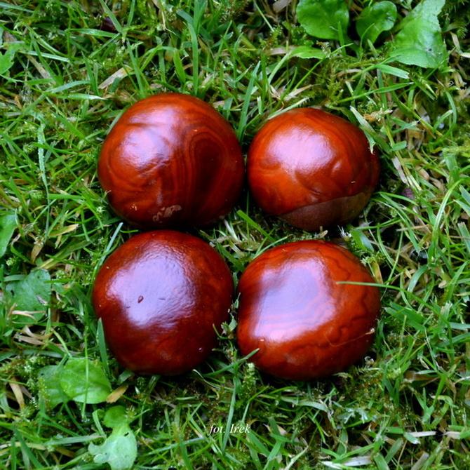 Następne owoce jesieni