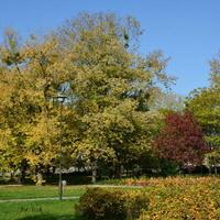 Aleja w parku