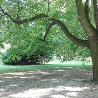Alejka w parku ;