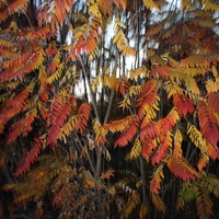 Barwy jesieni;-)