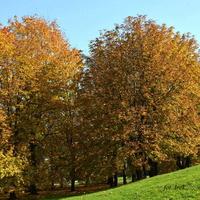 Drzewa zjeżdżające z górki