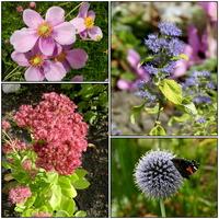 Jesienne kwiaty,rozchodnik,zawilec...
