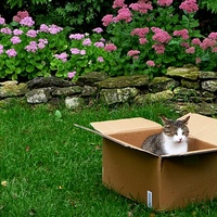 Kocia przesyłka.
