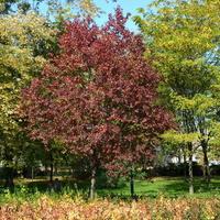 Kolorowe drzewa