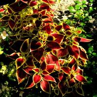 Kwiaty w ciepłym kolorze