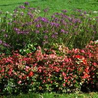 Kwiaty w parku i wiatr