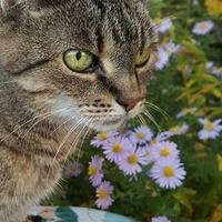 Mój kot Miziulka w Astrach