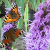 Motylki ze wspomnień...