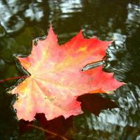 Na falach rzeczki płynie Jesień